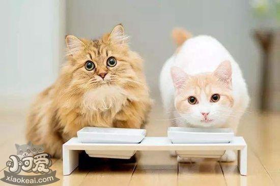 老年猫吃什么猫粮好 老年猫食用猫粮推荐