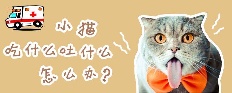 小猫吃什么吐什么怎么办