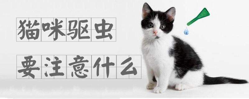 猫咪驱虫要注意什么