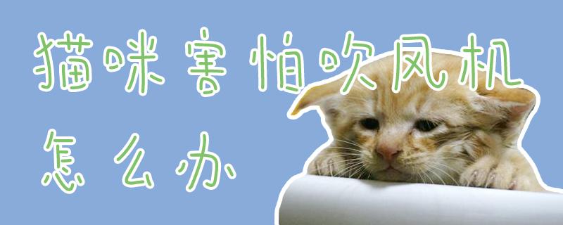 猫咪害怕吹风机怎么办