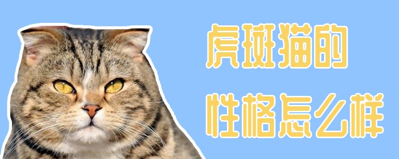 虎斑猫的性格怎么样