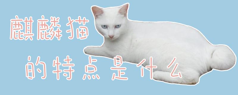 麒麟猫的特点是什么