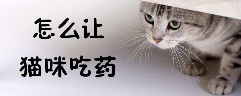 怎么让猫咪吃药