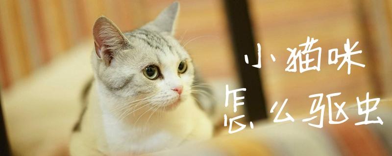 小猫咪怎么驱虫