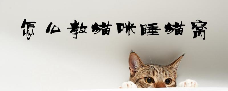 怎么教猫咪睡猫窝