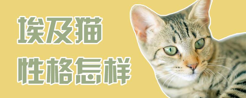 埃及猫性格怎样