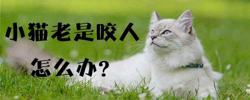 小猫老是咬人怎么办