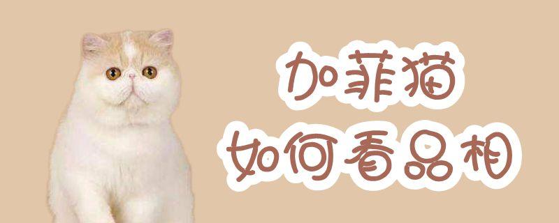 加菲猫如何看品相