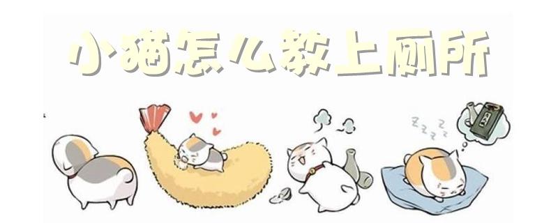 小猫怎么教上厕所