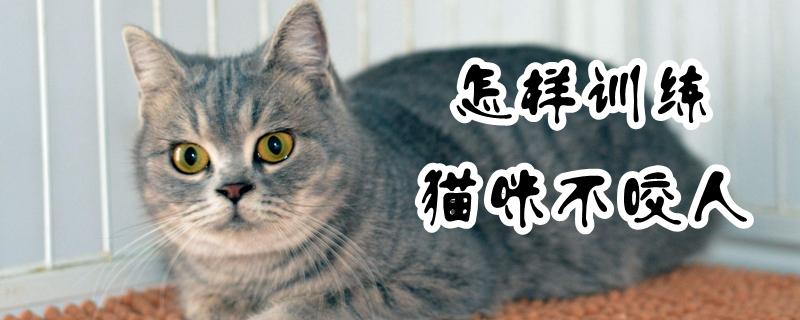 怎样训练猫咪不咬人