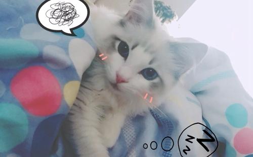如何训练布偶猫用猫抓板