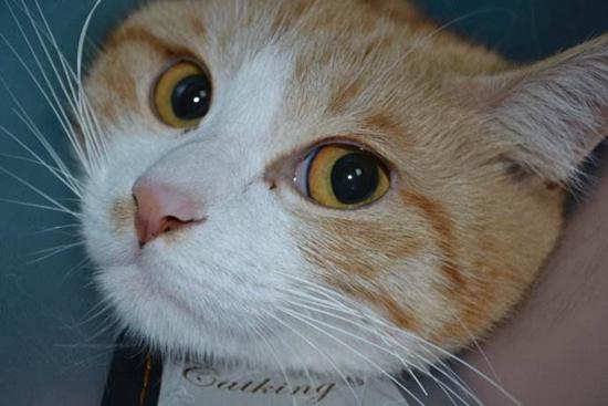 如何预防猫瘟 预防猫咪得猫瘟