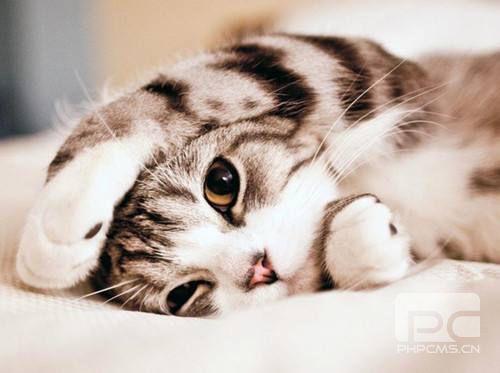 猫咪多少度算发烧 猫咪发烧处理方法