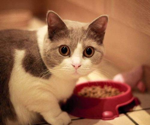 猫不吃化毛膏怎么办
