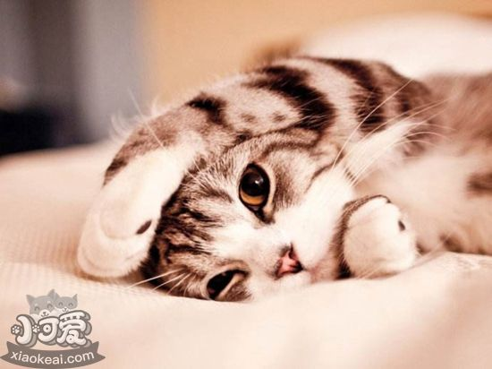 小猫拉稀怎么办 幼猫拉肚子可以治吗