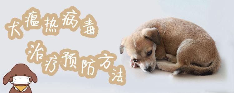 犬瘟热病毒治疗预防方法1