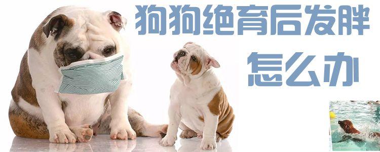 狗狗绝育后发胖怎么办