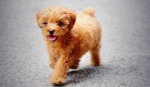 宠物狗皮肤病种类有哪些