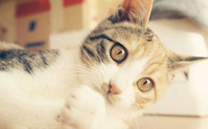 猫咪鼻炎有什么症状 猫咪鼻炎症状介绍