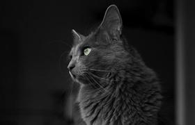 内华达猫打喷嚏怎么回事 打喷嚏原因介绍