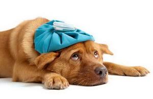 狗感冒了吃什么药