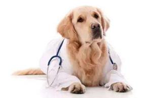 犬瘟热后遗症有哪些
