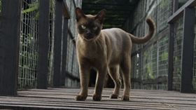 缅甸猫肠胃不好怎么办 缅甸猫肠胃不好解决办法