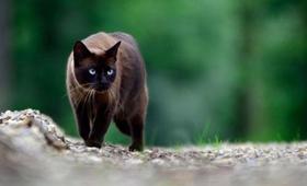 东奇尼猫发烧怎么办 东奇尼猫发烧解决办法
