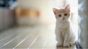 猫咪皮肤有几层 猫咪皮肤生理结构介绍