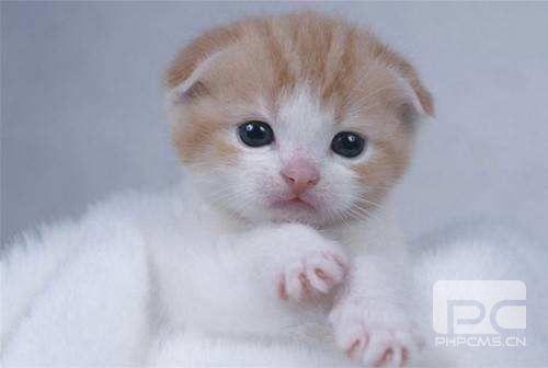 猫鼻支怎么治疗 幼猫得鼻支可以自愈吗
