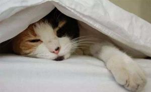 哪些原因会导致猫咪呕吐 猫咪呕吐原因