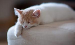 猫咪体温怎么测量 猫咪测体温方法