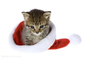 小猫咪应该吃什么