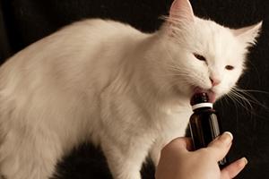 如何给小猫喂药