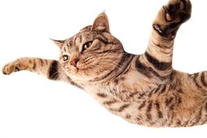 猫咪换牙齿应注意什么