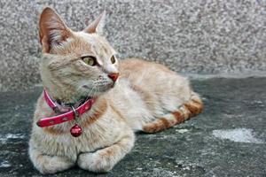 三个月小猫咪怎么养