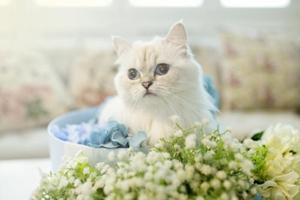 给两个月的小猫吃什么