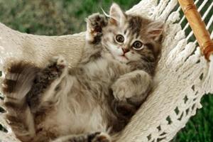 三个月猫咪吃什么最好