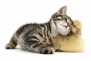 小猫带回家注意什么