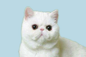 加菲猫的性格特点是什么
