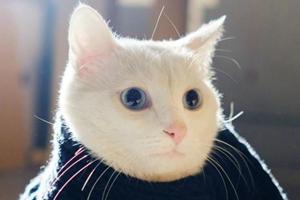 猫咪半夜一直叫怎么办