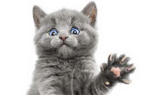 幼猫驱虫怎么做