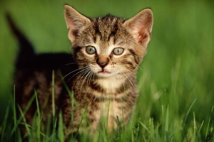 猫咪怀孕快生什么预兆