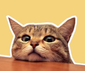猫泪痕怎么去除