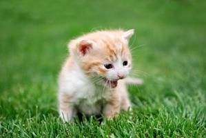 小猫不肯用猫砂怎么办