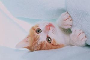大猫涨奶怎么办