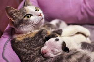 大猫没有奶怎么办