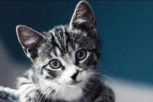 小猫护食怎么办