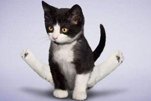 怎么教猫猫上厕所