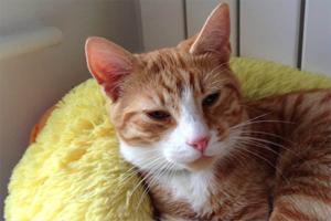猫咪往床上尿怎么办